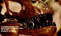 Craneo de tiranosaurio rex